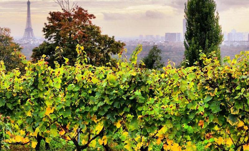 Soirée Privée @vignes de Suresnes